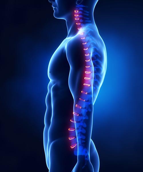 colonna_vertebrale_odontoiatria
